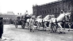 Historic photo of Kladrubers harnessed to the Austrian imperial state-carriage…