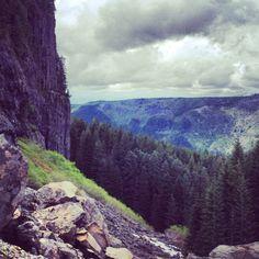 Oregon rain forests