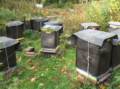 Beehives Wrapped For Winter at Brookfield Farm Bees And Honey, Maple Falls, WA