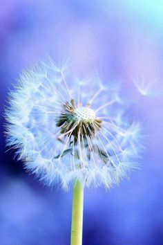 I wish that I could make a wish on a dandelion that would come true