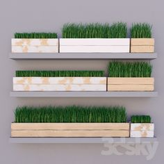 3d models: Plant - Grass in a box