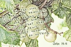 John 15:5 I am the vine; you are the branches. Whoever abides in me and I in him, he it is that bears much fruit, for apart from me you can do nothing. #vine #branch #abideinhim #fruit