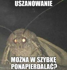 A można można Obserwuj Daj w góre komarowi Hasztagi: Wierd Pictures, Meme Pictures, Reaction Pictures, Really Funny Memes, Wtf Funny, Hilarious, Funny Lyrics, Polish Memes, Weekend Humor