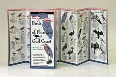 Birds of Florida's Gulf Coast ~ Folding Guide (By Sibley)