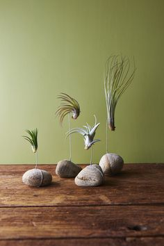 10 DIY Air Plant Holders For Your Home Tillandsia or commonly known as air plants are a type of plants that get their nutrients from the air. Air Plant Display, Plant Decor, Plant Wall, Ikebana, Air Plants, Indoor Plants, Indoor Cactus, Garden Art, Garden Plants