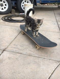 Oh, burger, you're cute. - Oh, burger, you're cute. Baby Animals, Funny Animals, Cute Animals, Skate Girl, Youre Cute, Skateboards, Cute Cats, At Least, Kitty