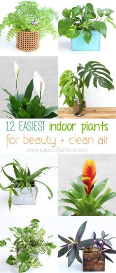 12 easiest  beautiful indoor plants to grow! NASA studies show they are super effective at cleaning air and removing toxins from indoor environments. - A Piece Of Rainbow http://www.apieceofrainbow.com/12-easy-indoor-plants/