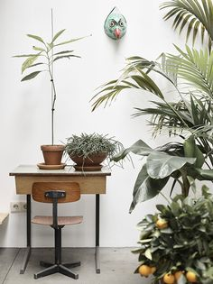 Formafantasma home studio | (my) unfinished home green plants in the home