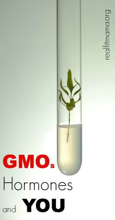 GMO's, Hormones & YOU - what you need to know to keep you & your family healthy | realfitmama.org