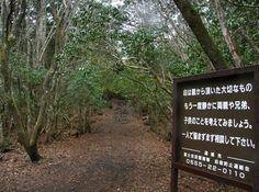 A Floresta do Além
