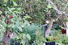 Oravankesäpesä: VALOJUHLAT.