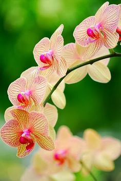 Fresh Orchids ما أجملها ألا تلاحظ دقة صنعها ،،، صنع الله الذي أتقن كل شيئ ،، سبحان الله