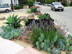 Shade Garden Flowers And Decor Ideas Agave Drago Agave Attenuata E Outras Suculentas Agave Attenuata, Succulent Landscaping, Landscaping Plants, Front Yard Landscaping, Sidewalk Landscaping, Landscaping Ideas, Low Maintenance Landscaping, Low Maintenance Garden, Types Of Succulents