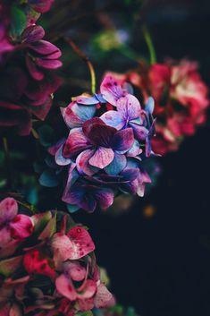 hydrangea garden care ~~ ~~ WE Oct 2018 ~ ( . Art Et Nature, Hydrangea Garden, Hydrangeas, Floral Room, Beautiful Flowers Wallpapers, Beautiful Flowers Pics, Flower Phone Wallpaper, Garden Care, Flower Aesthetic