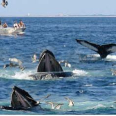 Whale watching in Sri Lanka