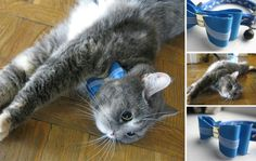 Jewelry for cats