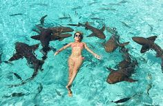 Swimming with pigs and sharks in Exuma Bahamas