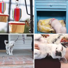 Crafts For People Who Love Making Animals Happy #pets #DIY #dogs #cats #birds