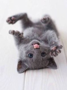 Feeling Blue? 23 Adorable Kitties To Lick Your Troubles Away