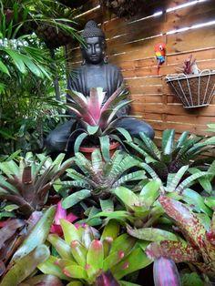 Tropical Gardens, Tropical Plants, Garden Center Displays, Garden Inspiration, Succulents, Gardening, Christmas Ornaments, Holiday Decor, Beautiful