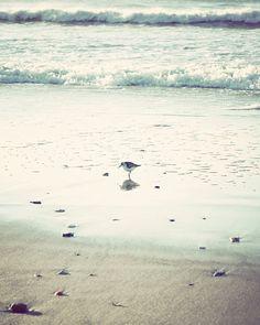 beach photography sandpiper shore bird coastal decor light blue beige coastal art sea beach cottage decor 8x10 beach print