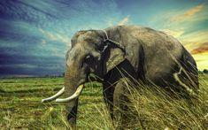 Download wallpapers elephant, 4k, wildlife, Thailand, elephants, Asia