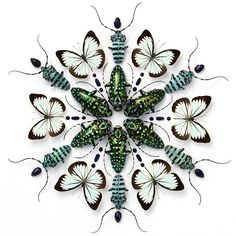 Patternbank are loving these symmetrically laid out insect artworks by Christopher Marley.  These beautifully arranged mandalas incorporate everything from