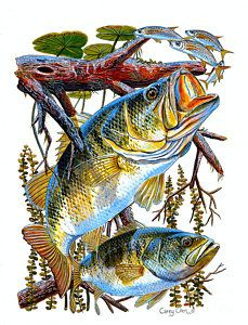 Freshwater fishing can be a great experience. Find out more about freshwater fishing including useful tips and how to stay safe when you are on the water. Wildlife Paintings, Wildlife Art, Bass Fishing Pictures, Pesca Sub, Fish Artwork, Kunst Poster, Fish Logo, Fish Drawings, Largemouth Bass