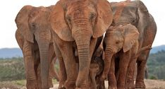 Addo Elephant Nation