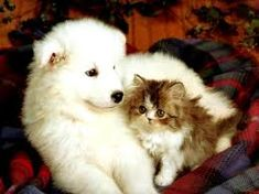 Happy Kitten Morning! Cute Puppies And Kittens  Free Books http://www.globalgrafxpress.com/goldmembersclub
