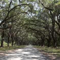 The perfect family-friendly fall weekend in Savannah