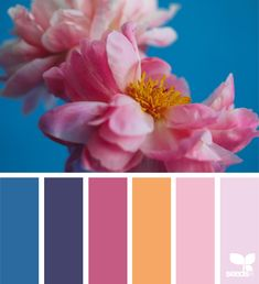 design seeds X ello | artist invite 02 featured artist : @elenakulikova