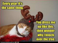 #cat #christmas #tree #dressing #up