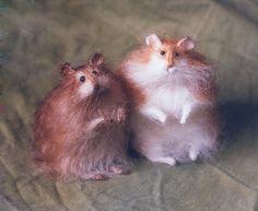 Stuffed Animals by Natasha Fadeeva - stuffed hamsters