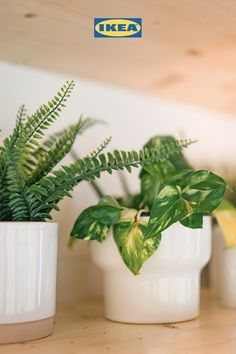 The IKEA Tiny Home is here to help you master small space living and lead a more sustainable life. #tinyhouse #houseplants #purifyair #ecofriendlytips #greenliving Small Space Living, Small Spaces, Pet Bottle, Growing Herbs, Ikea Furniture, Recycled Wood, Apartment Design, Shower Heads, Save Energy