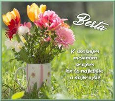 2.7 Berta Plants, Plant, Planets
