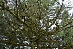M   o    m    e    n    t    s    b    o    o    k    .    c    o    m: Στον Αίνο τίποτε δεν είναι απλό ή ... βαρετό.  Κλα... Nature, Plants, Naturaleza, Plant, Nature Illustration, Off Grid, Planets, Natural