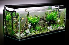 Aquascaping Planted Aquarium | ... Aquascaping - Aquascape Aquarium - Freshwater Aquarium Plants for