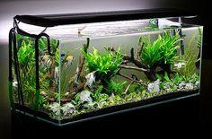 Aquascaping Planted Aquarium | ... Aquascaping - Aquascape Aquarium - Freshwater Aquarium Plants for
