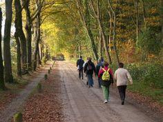 wandeling - Google zoeken April Wedding, Country Roads, Workout, Sport, Google, Deporte, Work Outs, Sports, Exercise