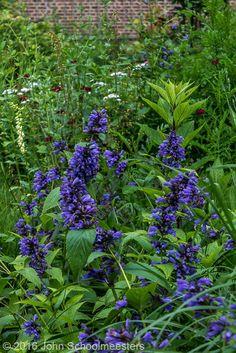 Nepeta subsessilis - Gardendesign | Tuinontwerp |  Planting Design by John Schoolmeesters