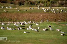 Luxus Golf Larache Morocco Luxus Golf Larache Morocco