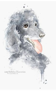 Amy Holliday | Poodle Portraits http://www.amyholliday.co.uk/poodleportraits.html