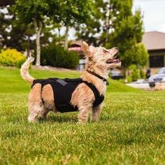 Dog Products – Alpha Paw LLC Training Pads, Dog Training, Dog Braces, House Breaking A Puppy, Intervertebral Disc, Dog Ramp, Puppy Pads, Us Vets, Real Dog