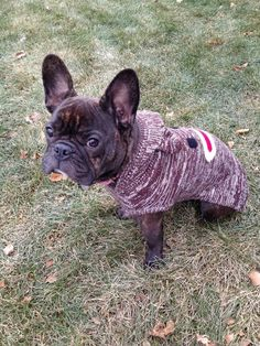 This could be Mr. Boo's brother!! Cute Frenchie #Frenchbulldog