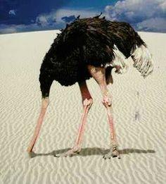 """#España Escribí esto en agosto 2012 y me asusta releerlo y ver que seguimos igual """"10 insensateces de una avestruz…"""""""
