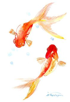 Two Goldfish Feng Shui Art Print by Suren Nersisyan Two Koi Gold Carp Fish Lotus Stock Vector (Royalty Free) koi gold carp fish. Lotus flower with water splash and feng shui coins. Feng Shui Art, Feng Shui Paintings, Desenho Tattoo, Fish Art, Watercolor Paintings, Watercolor Fish, Painting Abstract, Acrylic Paintings, Watercolor Paper
