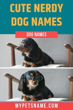 Why not name your little four-legged explorer 'Frodo' after Tolkien's most famous Hobbit? This would be a great nerdy name for a brown haired cute little pooch. Check out our list of cute nerdy dog names for more ideas.  #cutenerdydognames #nerdydognames #cutedognames Cute Pet Names, Dog Names, Dutch Artists, World War One, Four Legged, Tolkien, The Hobbit, Cute Dogs, Nerdy