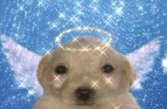 """✧ on Twitter: """"happy leo new moon… """" Cute Memes, New Moon, Polar Bear, Happy, Animals, Leo, Twitter, Animales, Animaux"""