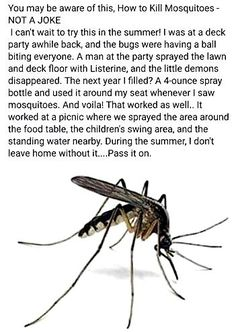 Simple Life Hacks, Useful Life Hacks, Survival Life Hacks, Survival Tips, Do It Yourself Camper, Mosquito Spray, Insecticide, H & M Home, Home Hacks